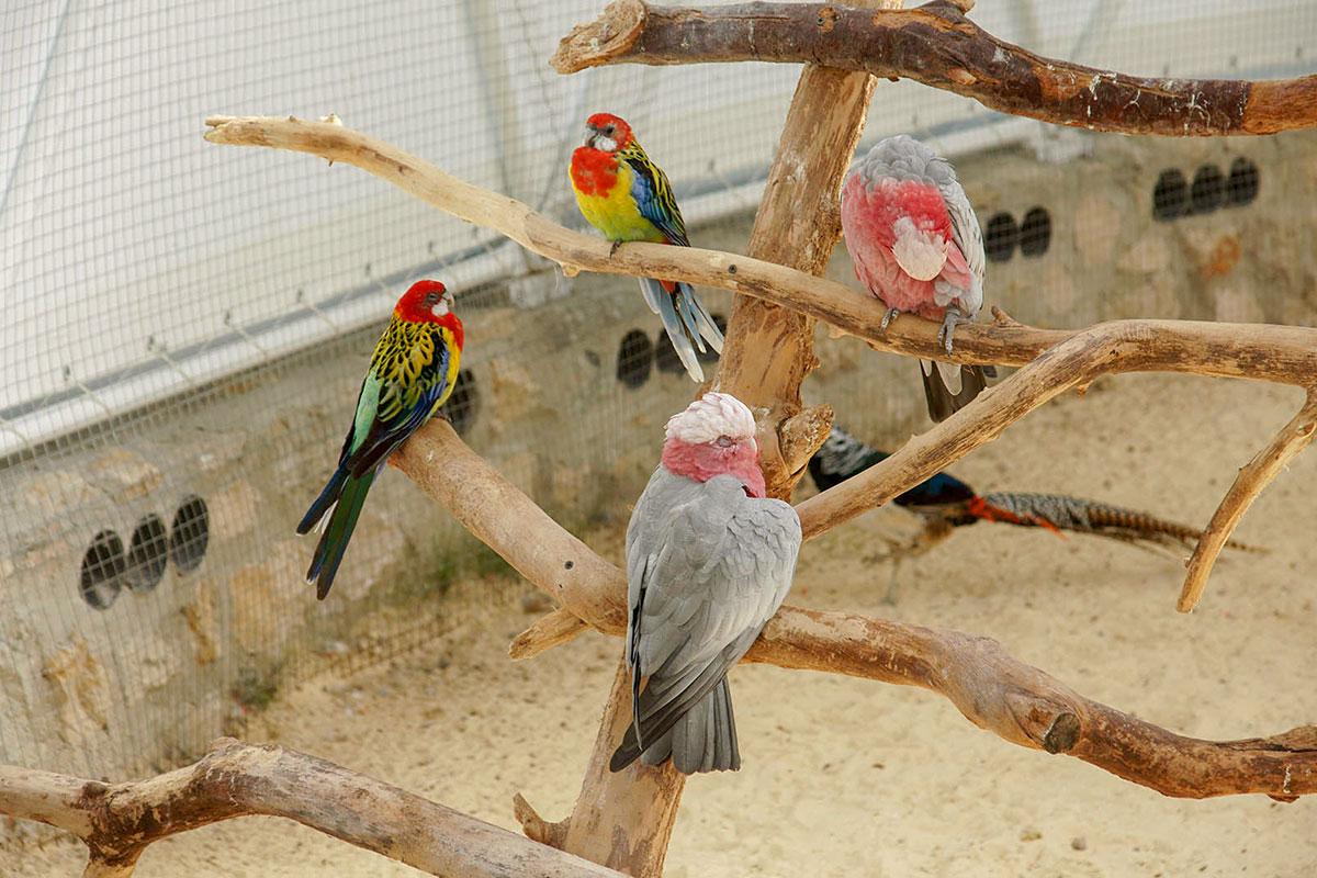 Основными пернатыми обитателями Динотерия в Коктебеле выбраны разнообразные, ярко окрашенные и совершенно не пугливые попугаи всего мира.