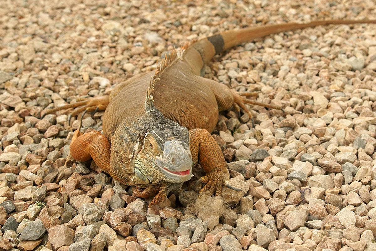 Динотерий в Коктебеле старается предоставить своим питомцам условия пребывания, как можно более близкие к природным местам обитания.