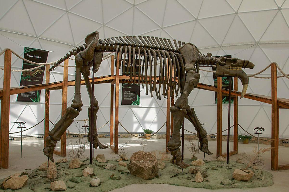 Динотерий в Коктебеле представляет тщательно воссозданный скелет древнейшего животного, существовавшего после заката эры динозавров.