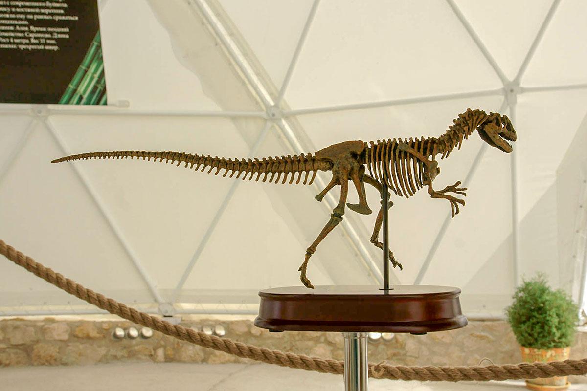 Предшественники основного экспоната Динотерия в Коктебеле представлены уменьшенными во много раз копиями скелетов, выполненными с находок.