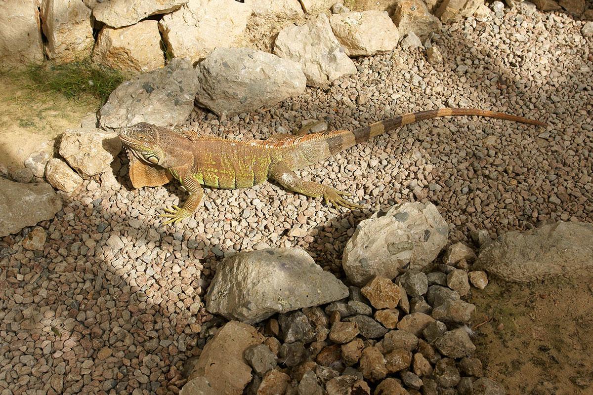 Посещающим Динотерий в Коктебеле следует смотреть под ноги, чтобы не нанести ущерба его малогабаритным и вездесущим обитателям.