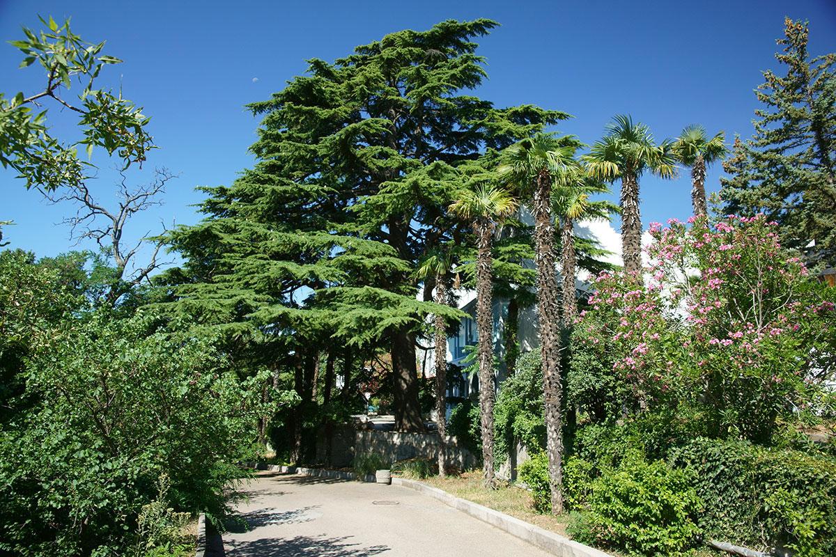 Небольшой, но предельно продуманный парковый комплекс с разнообразной растительностью окружает оба корпуса дворца Дюльбер, ныне санатория.