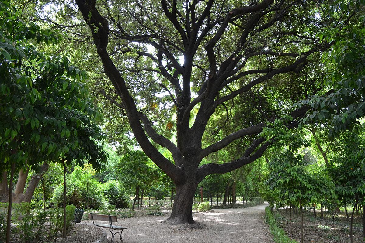 Для подстраховки вековых деревьев Национального сада, рядом с которым находится Парламент Афин, высажено много молодых, подрастающих саженцев.