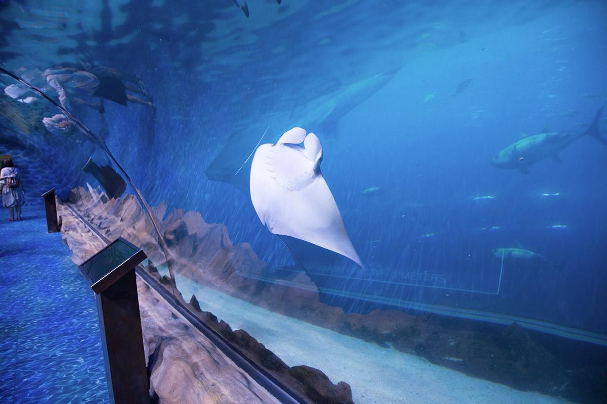 Живописно выглядят плиты покрытия пола в подводном тоннеле аквариума в Дубай Молле, когда на них проецируется водная поверхность.