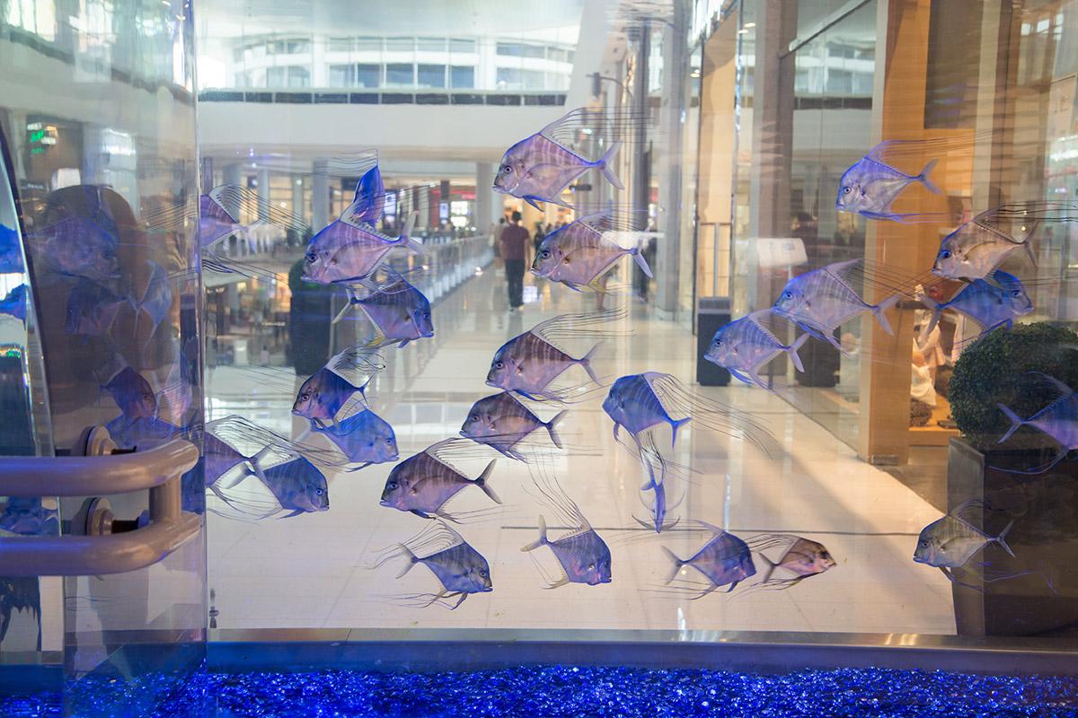 Известный рекордными размерами лицевого стекла главного бассейна, аквариум в Дубай Молле имеет еще несколько разделов, от подводного тоннеля до вольеров.