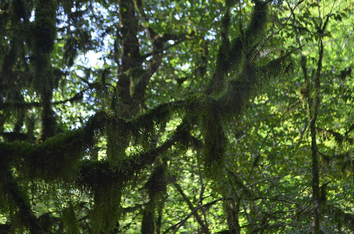 Субтропическая растительность на тропе к 33 водопадам.
