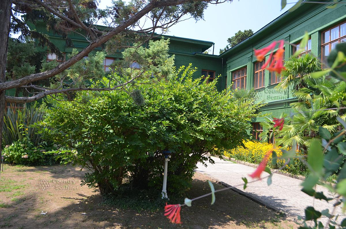 Зеленые насаждения дачи Сталина в Сочи