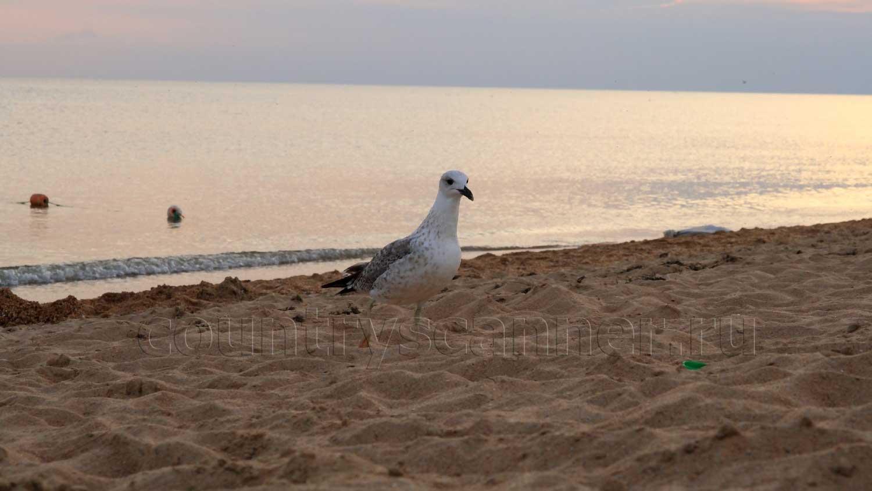 Россия, Геленджик, черноморское побережье, море, чайка, https://countryscanner.ru/