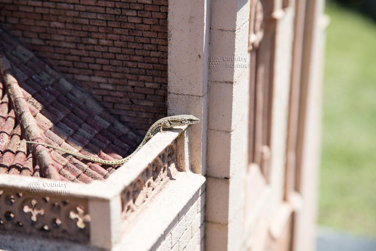 Ящерица на крыше здания в парке Каталония в миниатюре