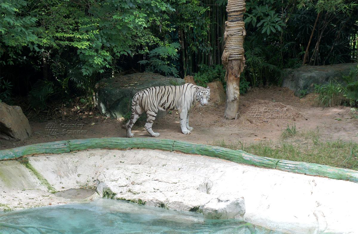 kao-keo-zoo-5