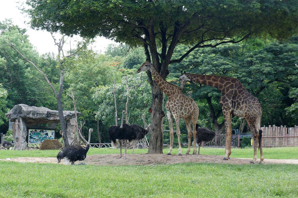 kao-keo-zoo-countryscanner-11