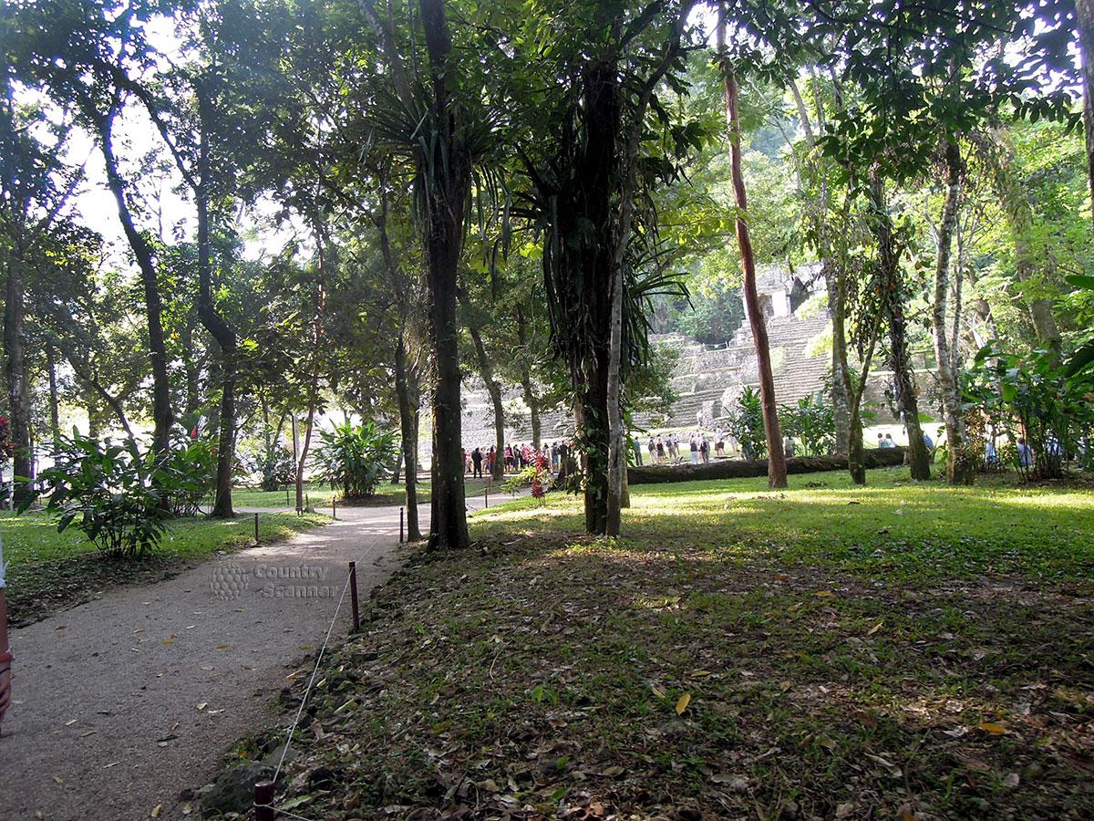Руины Паленке в Мексике. Тропические заросли