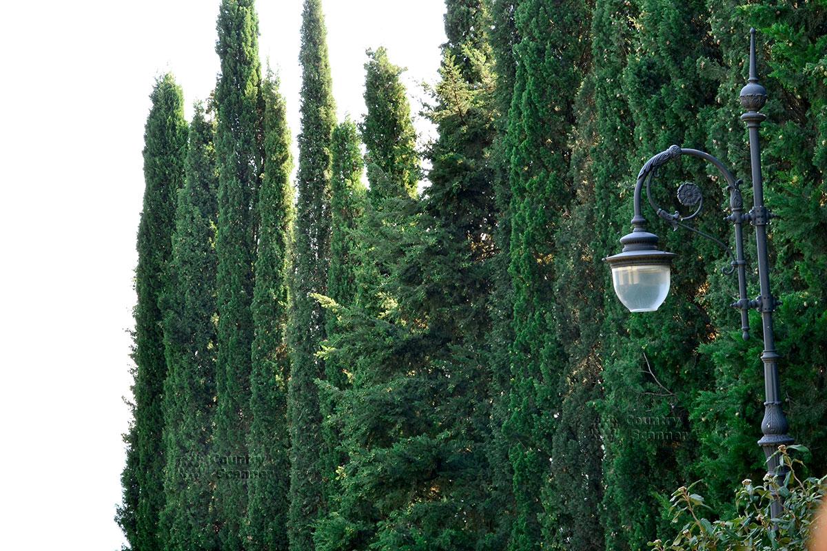 Фонарь на фоне деревьев в парке Айвазовского