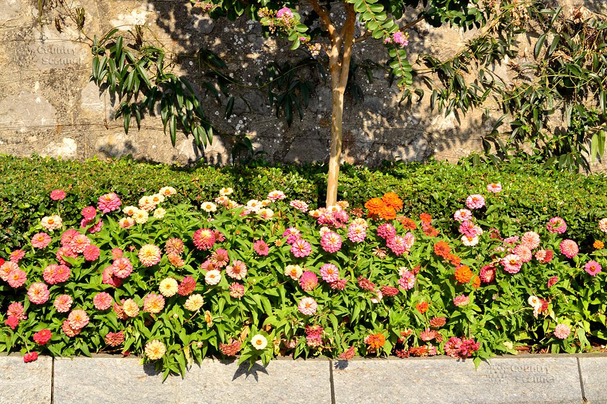 Цветы около пешеходной дорожки в парке Айвазовского
