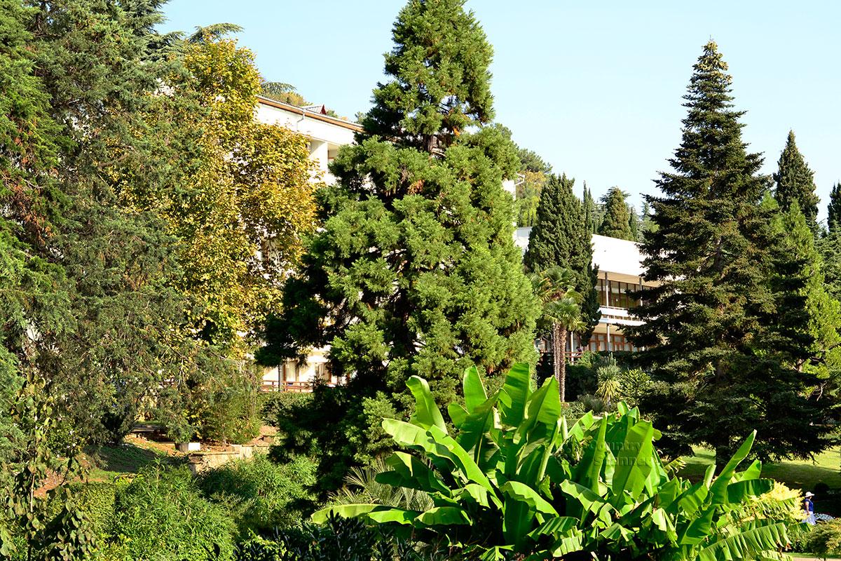 Один из корпусов санатория в парке Айвазовского, утопающий в зелени.