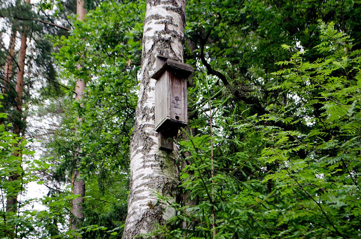 Приокско-Террасный заповедник. Скворечник для летучих мышей.