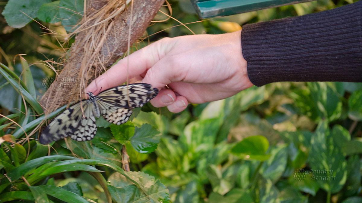 Пестрая обитательница Дома бабочек в Вене.