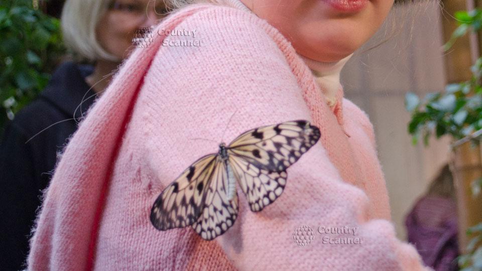 Дом бабочек в Вене. Дружба между бабочкой и человеком.
