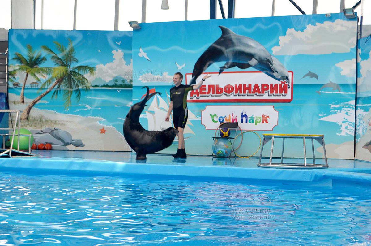 Дельфинарий Сочи парка.