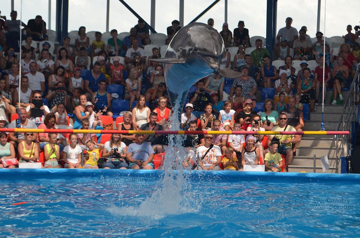 Дельфинарий Сочи парка. Сольный номер.