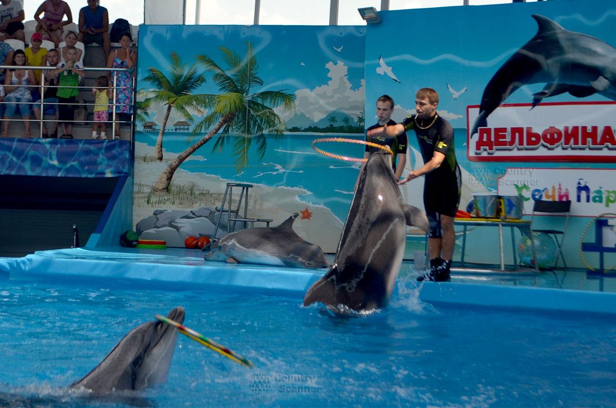 Парное выступление дельфинов-афалинов в Сочи парке.