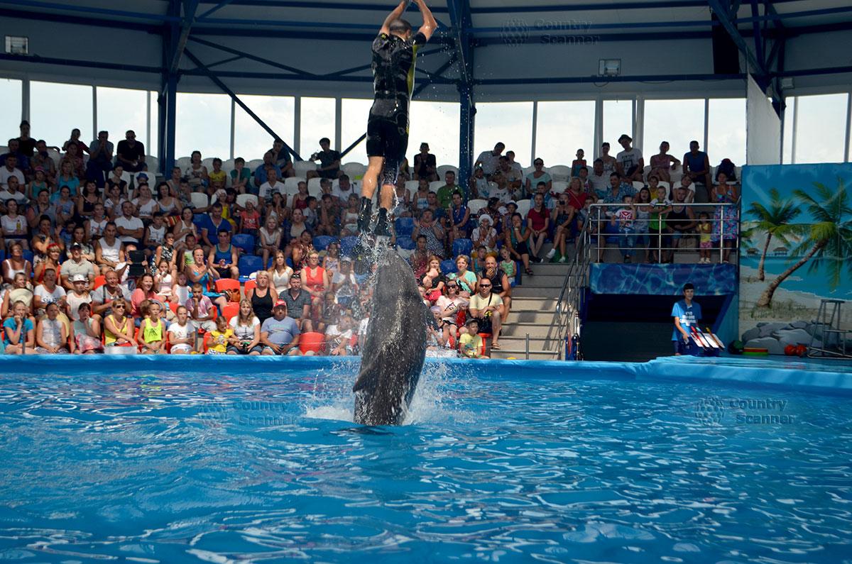 Сочи парк. Инструктор верхом на дельфине.