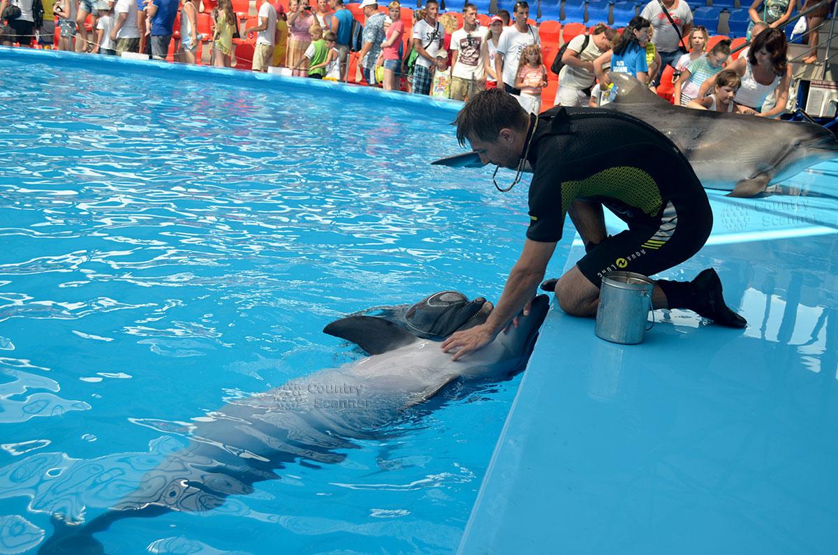 Сочи парк. Инструктор с питомцами в дельфинарии.