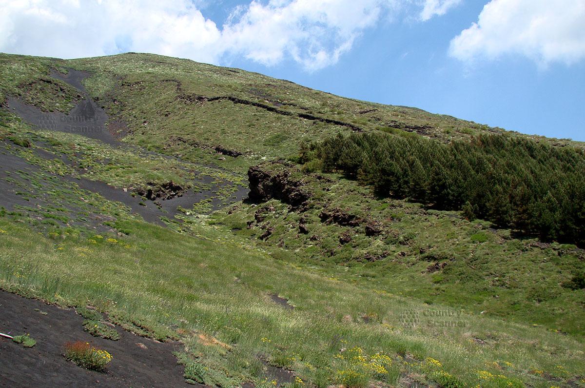 Склон вулкана Этна, покрытый растительностью.
