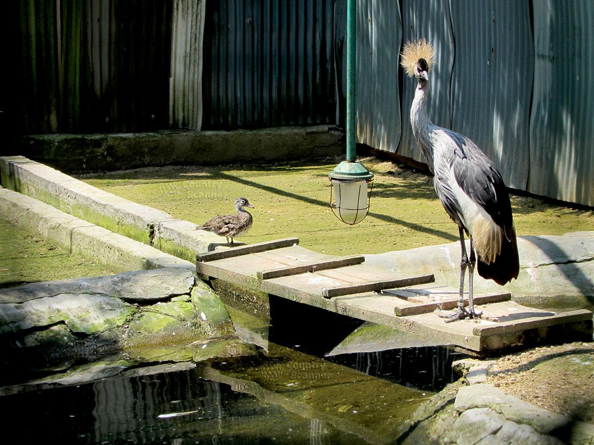 заповедник Аскания-Нова. Птица на доске
